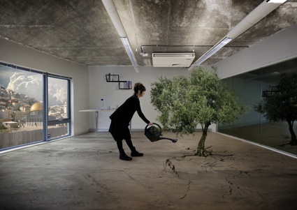 0Nation-Estate-Olive-Tree.jpg