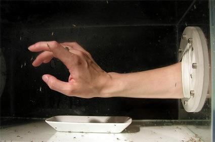 0akunkel_hand_mosquitobox.jpg