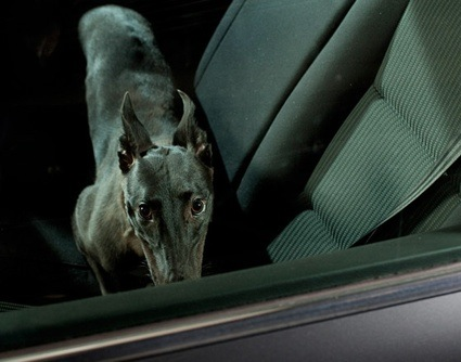 0martin-usborne-the-silence-of-dogs-in-cars-10.jpg