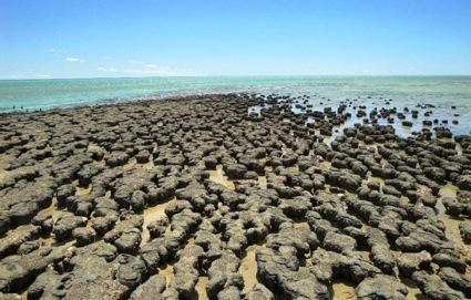 Shark Bay Stromatolites Stromatolites in Shark Bay