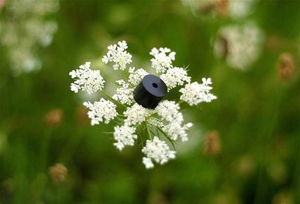 1piezzoflower5638174e.jpg