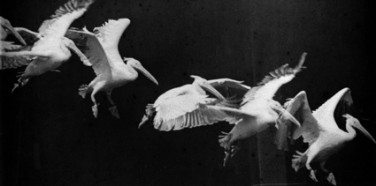 2a4_marey-bird-flight-1886.jpg