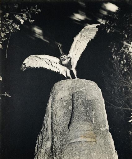 Cercophitecus Icarocornu from the Fauna series by Joan Fontcuberta and Pere Formiguera, 1987 ∏ Joan Fontcuberta and Pere Formiguera.jpg