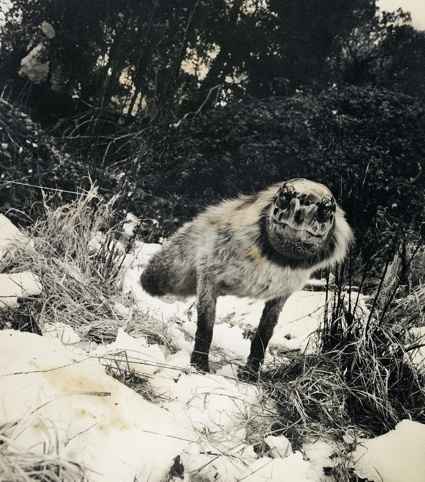 The long-lost archive of curious animals