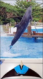 dolphin.4D85